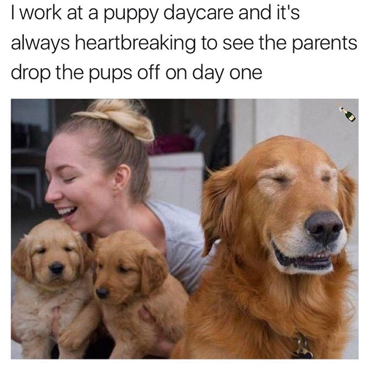 the 50 funniest memes of the week funny gallery ebaum s world