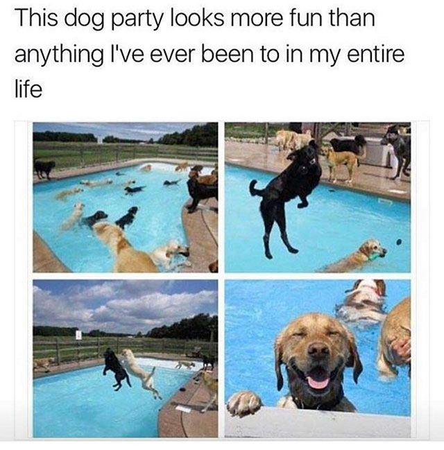 3 - Awesome meme of what looks like the most fun dog party evern