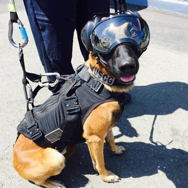 Rescue Dogs Miami Beach