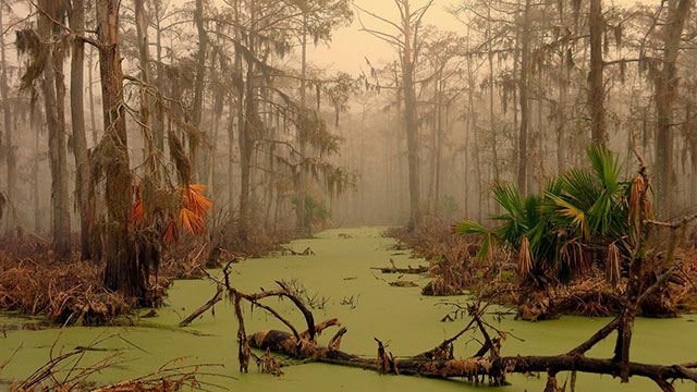 6 - Majestic AF pic of a Louisiana Swamp Louisiana swamp