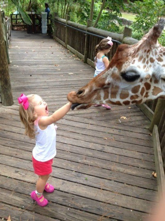 8 - Giraffe with girls arm in mouth