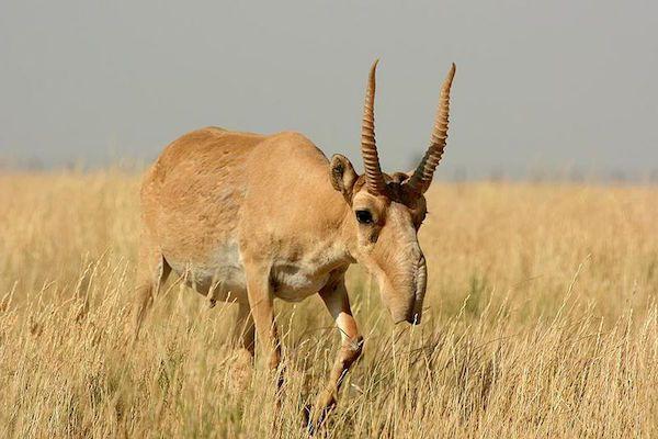 Free funny videos blonde antelope spreads xxx