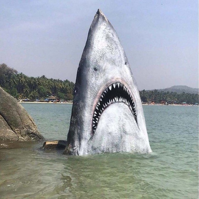11 - Someone painted this rock to make it look like a shark.