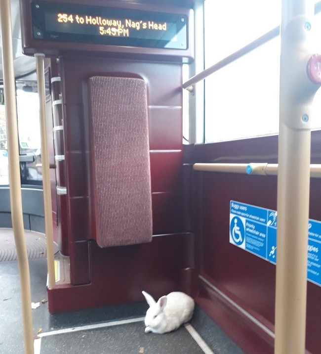 """20 - """"There's a rabbit on my bus."""""""