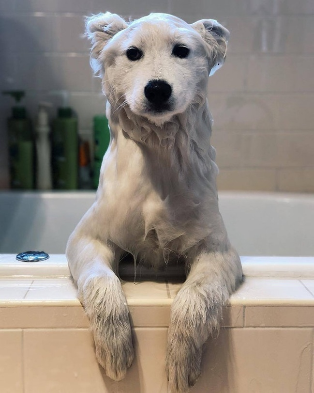 "14 - ""He looks like a polar bear during his baths."""