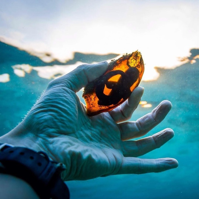 19 - This is what a shark egg looks like.