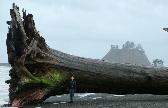 21 - This giant piece of driftwood