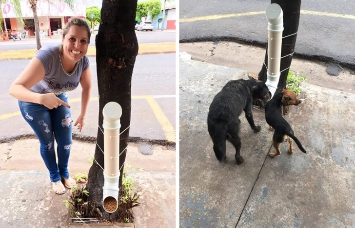 1 - A solution to feeding stray dogs