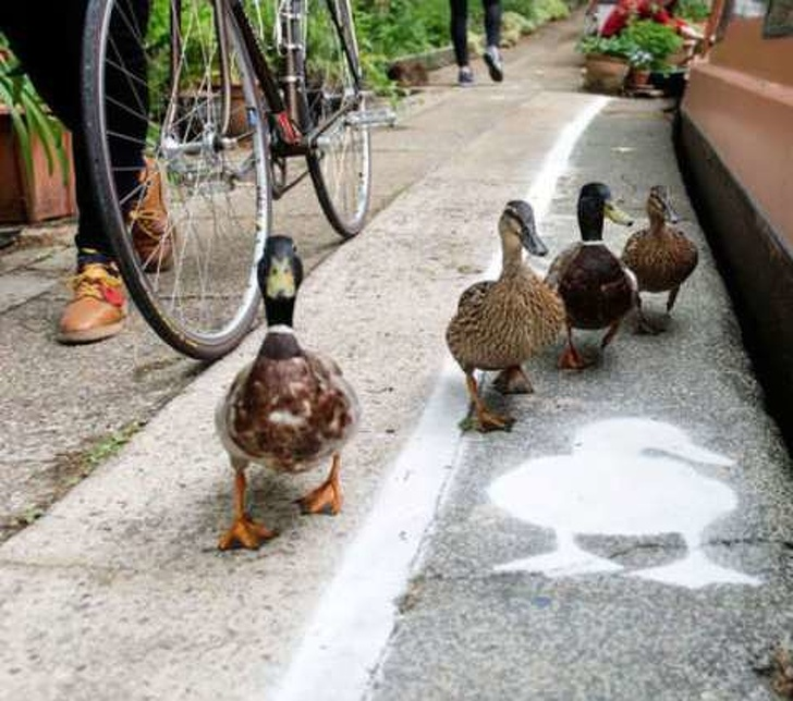 10 - Special duck lanes