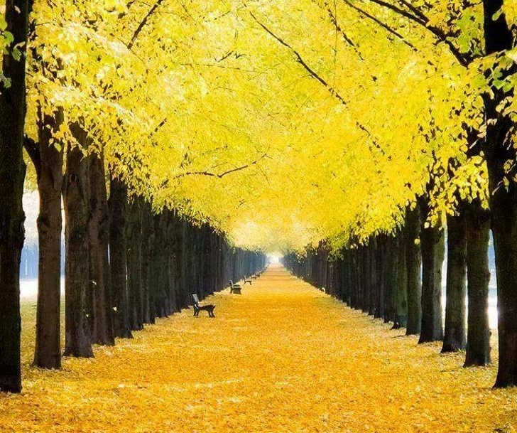 6 - A yellow road in Germany