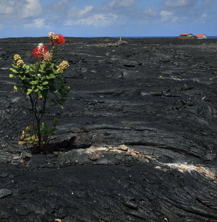 11 - Flowers growing through lava