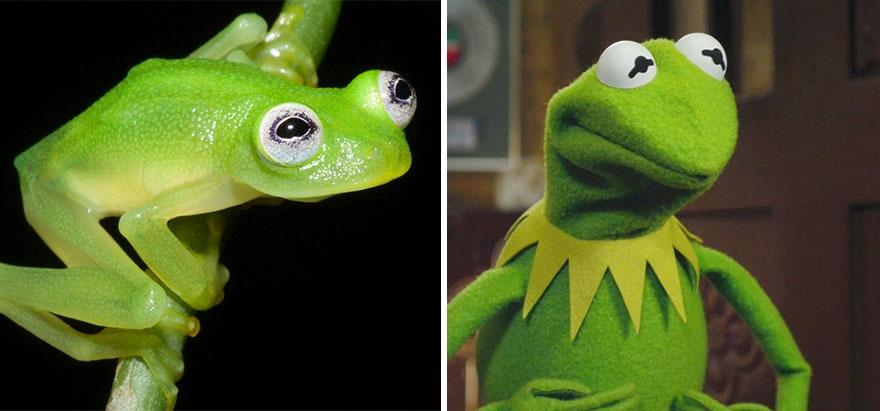 8 - Scientists Find A Frog In Costa Rica That Looks Just Like Kermi