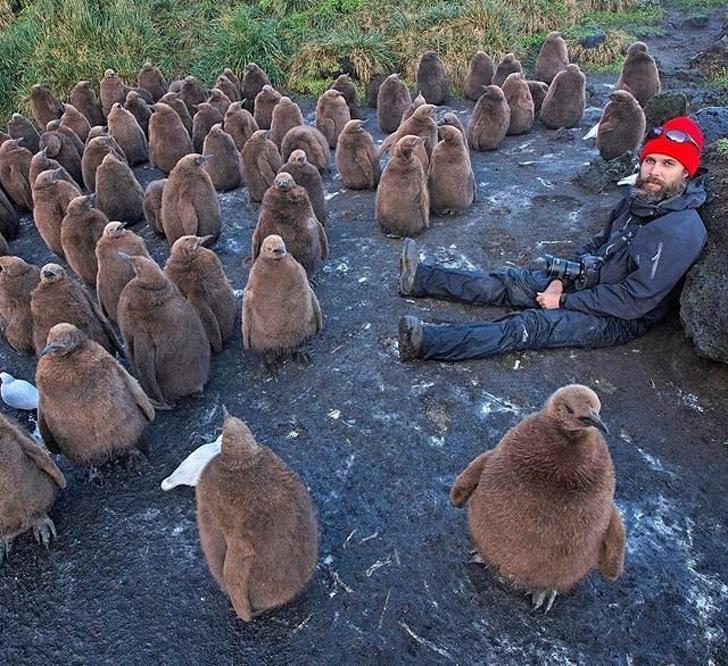 27 - A penguin paradise