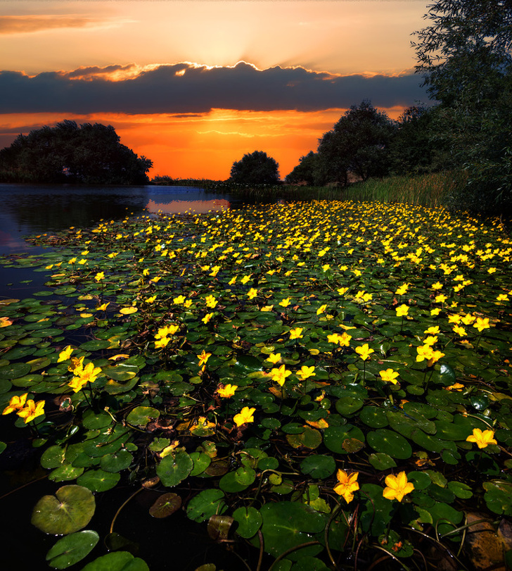 28 - A sunset at the Monastiс Lake in Beshtau City where bog-flowers are in bloom