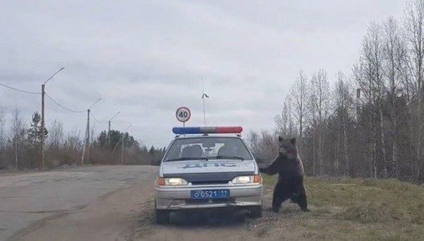 8 - 23 WTF pictures from Russia