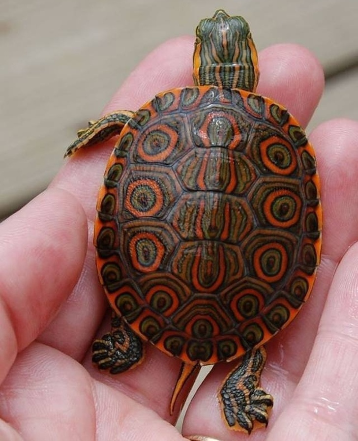 17 - A turtle adorning incredible patterns