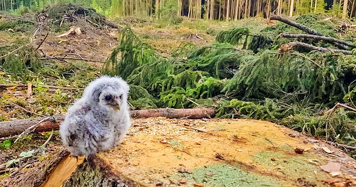 21 - An owl lost its home after massive deforestation.