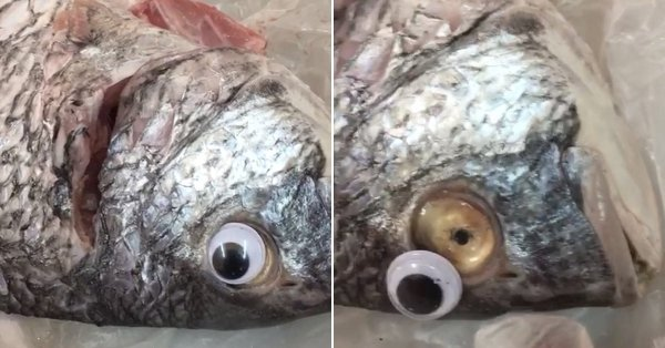1 - Yesterday, Kuwaiti police had to shut down a fish store that was sticking 'googly eyes' on fish in order to make them appear more fresh than they are. It was unsuccessful to say the least.