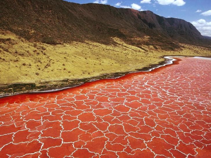 3 - The surface of Lake Natron in Tanzania looks like a giraffe skin pattern.