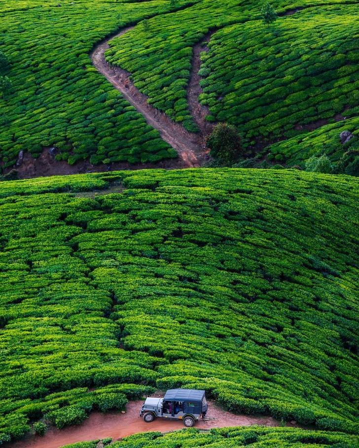 5 - The mesmerizing green of Kolukkumalai tea plantations, India.