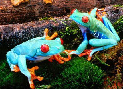 Unusually Colored Animals  Gallery  eBaums World