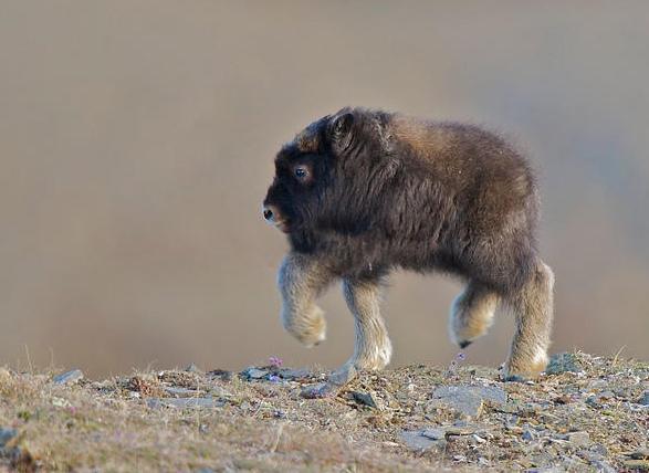animals without necks gallery ebaum s world