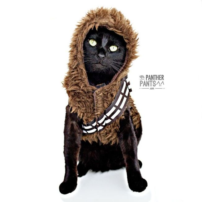 Chewbacca May The 4th Be With You: 21 Animals Celebrating Star Wars - Wow Gallery