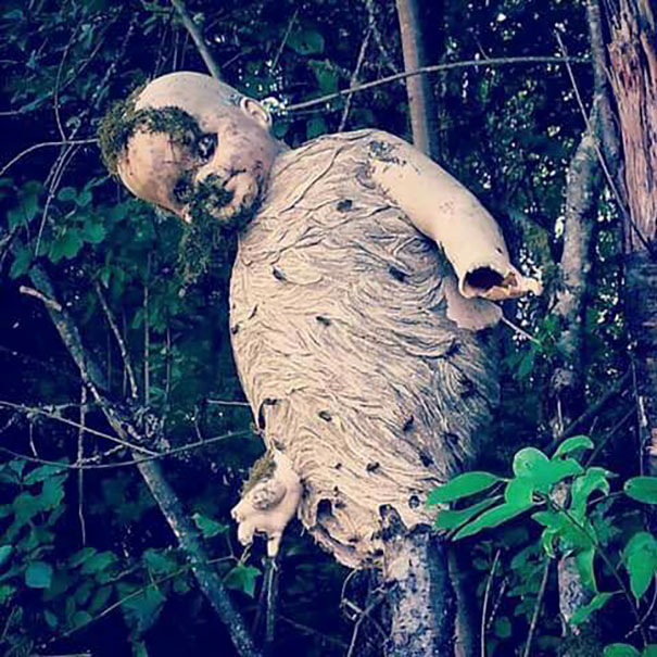 9 - Wasp nest that was built over a doll