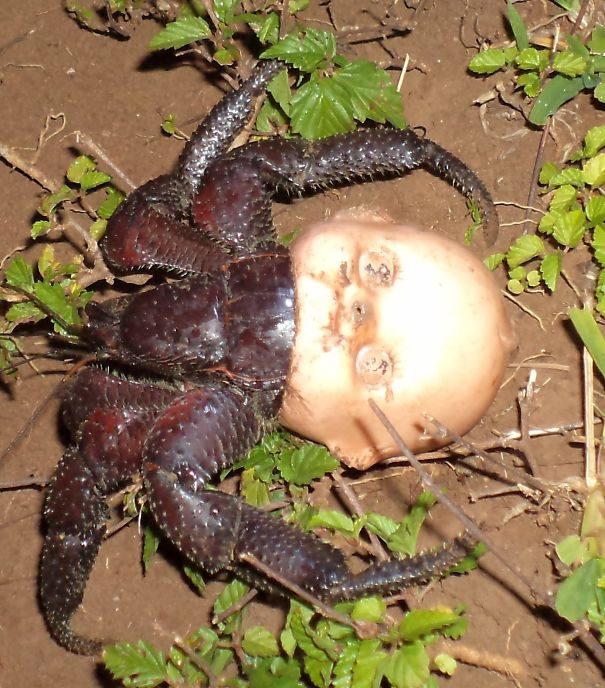 6 - Crab that made a home out of a dolls head