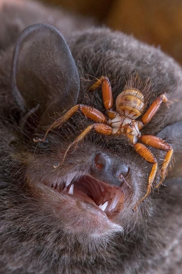 11 - Creepy spider on a bat's eyes.
