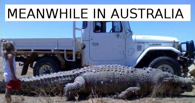 1 - 26 Meanwhile In Australia Pics That Will Make You Wanna Get Pissed Drunk And Fight A Koala Bear