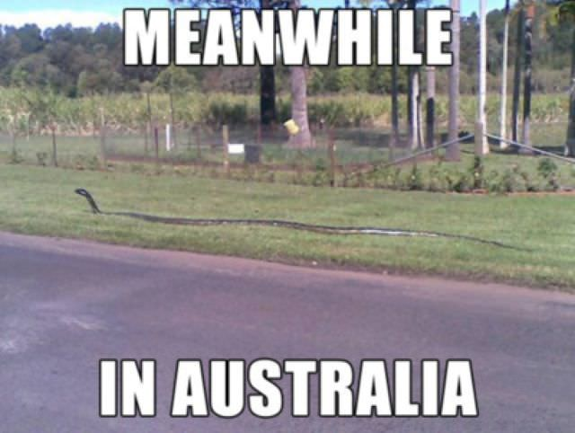 5 - 26 Meanwhile In Australia Pics That Will Make You Wanna Get Pissed Drunk And Fight A Koala Bear