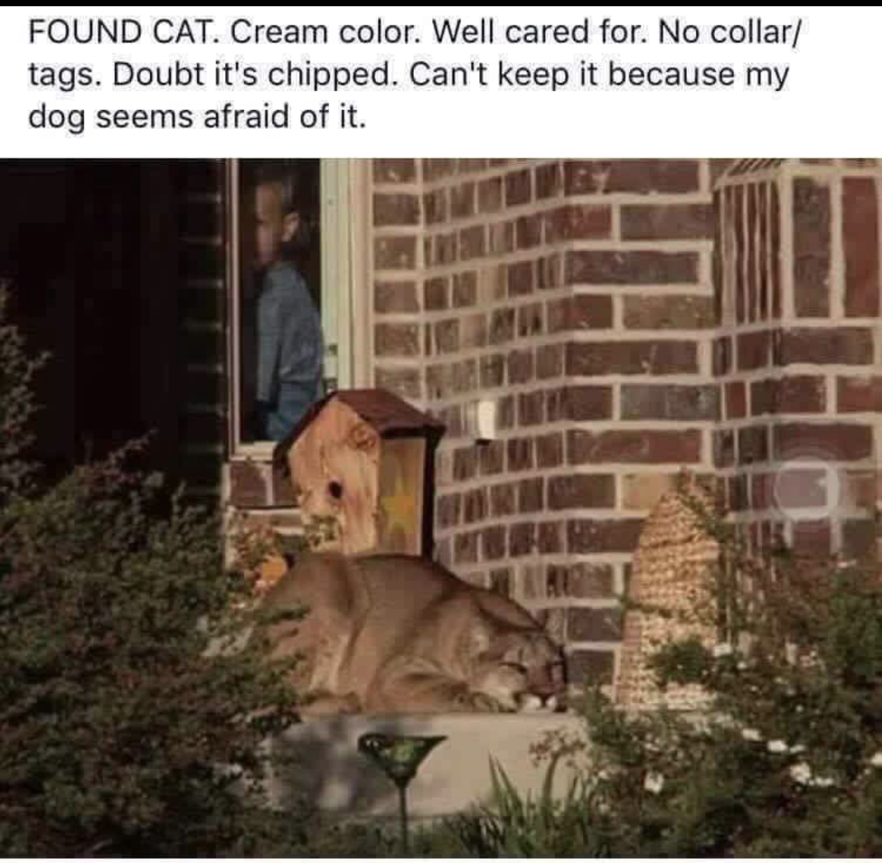 3 - Funny meme about cat for adoption but looks more like some kind of mountain lion.