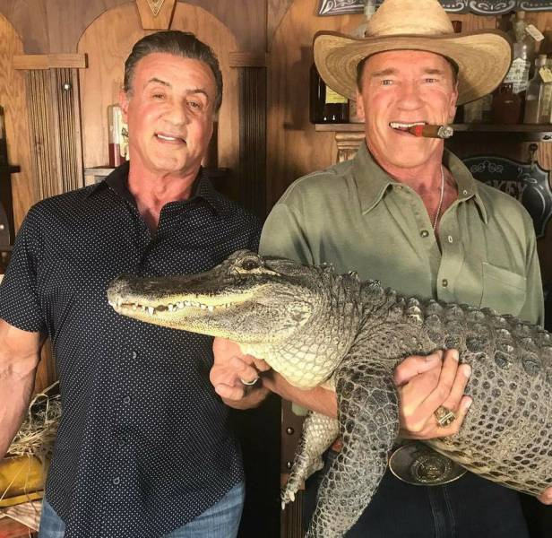 8 - Picture of Sylvester Stallone and Arnold Schwarzenegger holding a crocodile and cigar in the mouth.