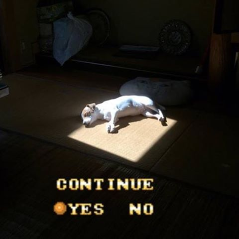 11 - Dog sleeping in light from the window memed to look like end of video game.