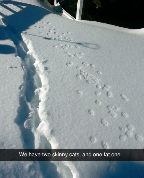 28 - snow tracks with comment that they have two skinny cats and one fat one.