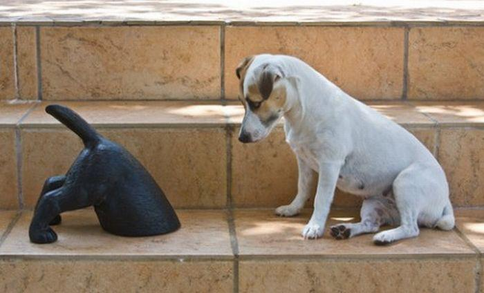 1 - Cute dog looking at sculpture of a dog sticking his head in the ground.