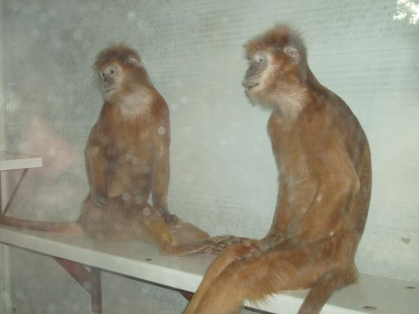 Ginger Monkeys - Picture | eBaum's World