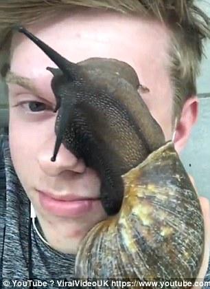 3 - Snails