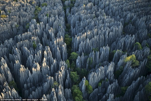 1 - The Stone Forest of Madagascar