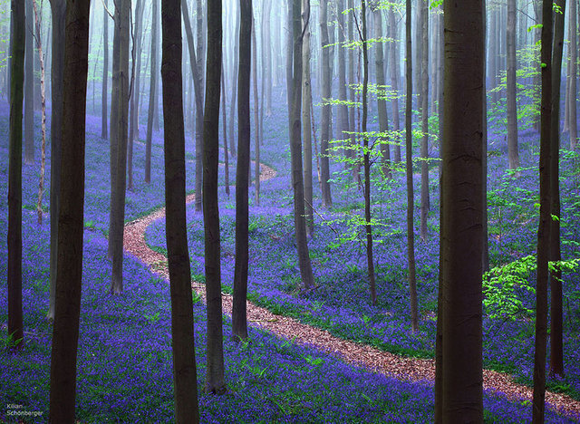 7 - The magical Halle forest in Belgium