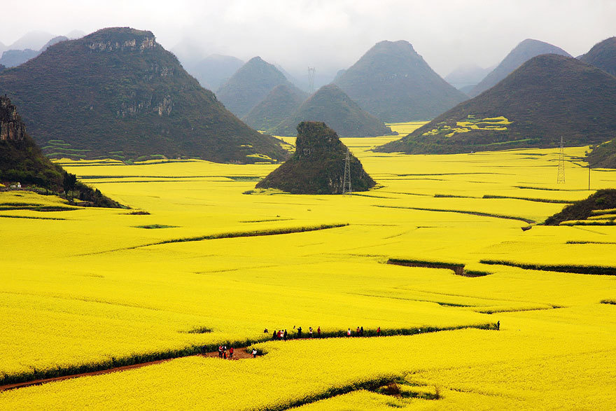 14 - The Canola Flower Fields in China