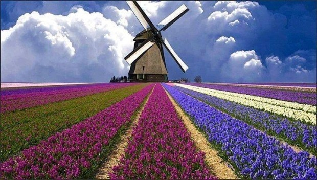 3 - A field of flowers in Holland