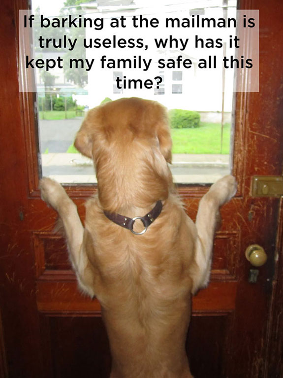 barking at mailman