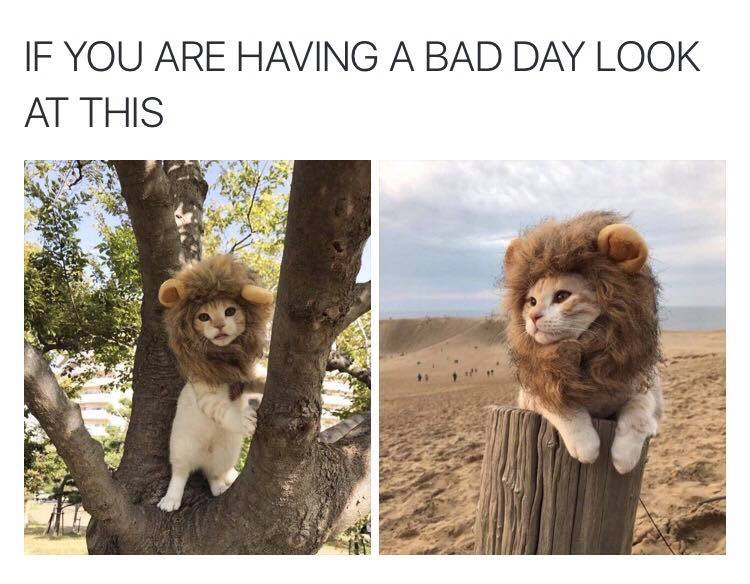 Funny Memes For A Bad Day : Animal capshunz bad day funny animal pictures with captions