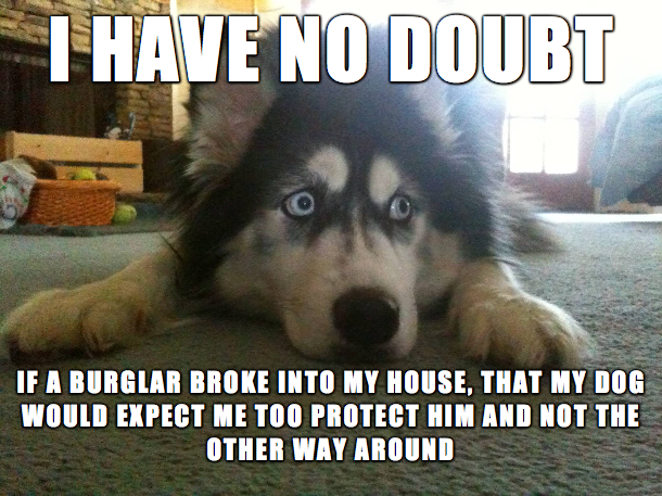 Meme Funny Husky Dogs : 28 funny memes to kick start your day funny gallery ebaum's world
