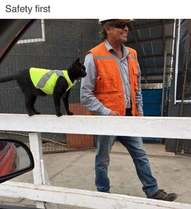 5 - Cat wearing a safety vest