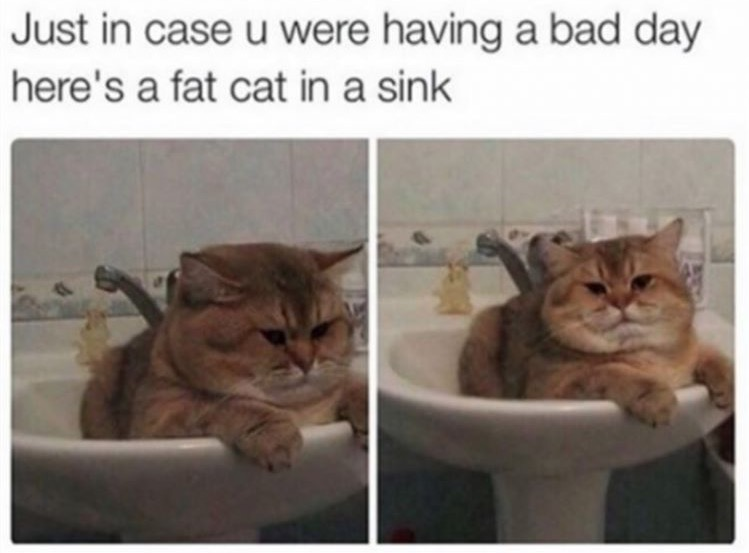 13 - Fat cat in a sink, just in case you are having a bad day.