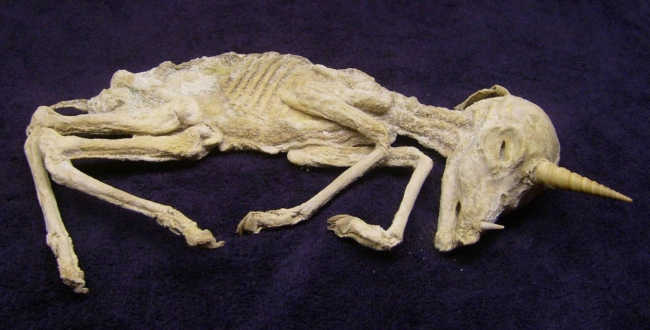DeviantArt: More Like Mummified Unicorn Progress 1 by DETHCHEEZ