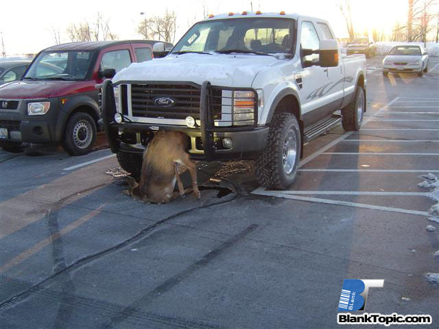 Ford Vs. Deer - Picture